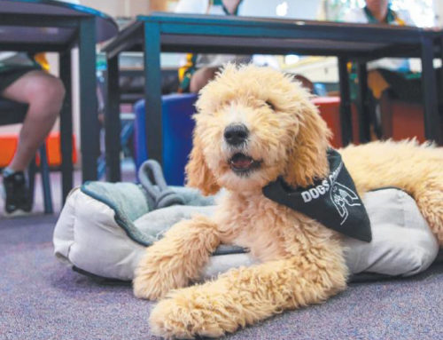 St Phillip's Christian College Welcomes a Wellbeing Dog to Support Students